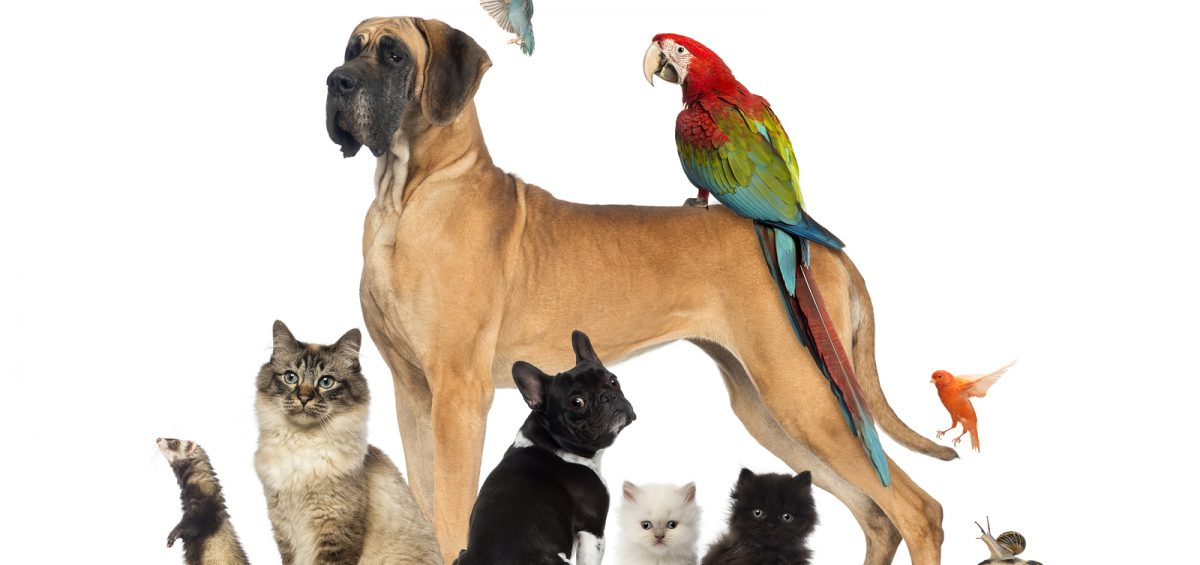 Moving with pets is not simple - understand what you will need.