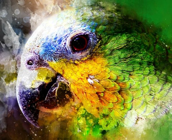 Parrot in colors of Brasil