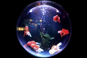 Fish bowl for easy relocation
