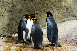 Some penguins from the Central Park Zoo, which is a place to visit if you spend summer in Manhattan