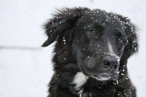 a black dog in a snow