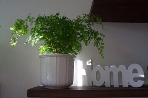 A home sign and a plant