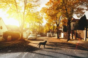 a dog standing in the street