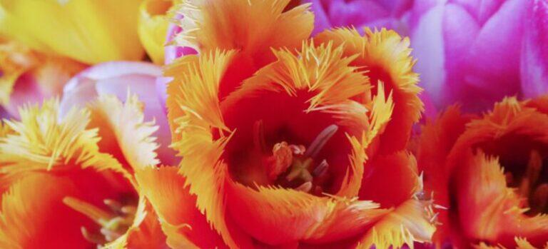 Blooming orange and violet flowers.