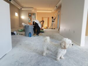 A man's best friend supervising the renovation
