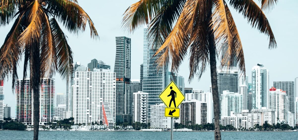 miami skyline and palm trees