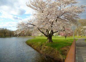 New Jersey spring landscape.