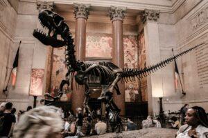 Dinosaurs skeleton at AMNS