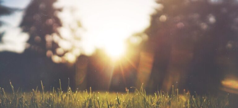 Sunrise and nature