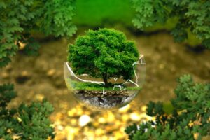 A tree in a glass bubble.